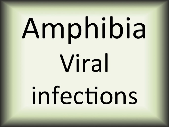 Amphibia viral infections