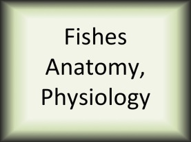 Fishes Anatomy, Physiology