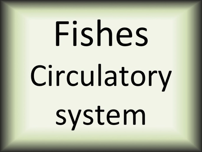 Fishes circulatory system