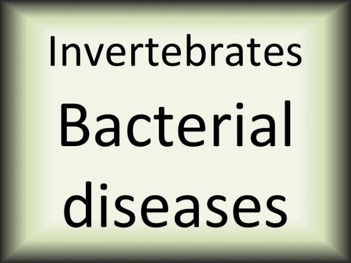 Invertebrates bacterialinfections
