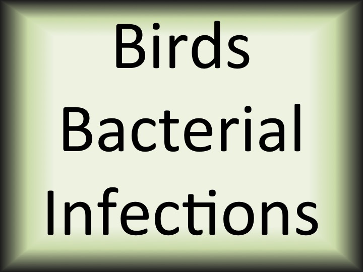 Birds bacterial infections