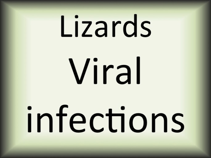 Lizards viral infections