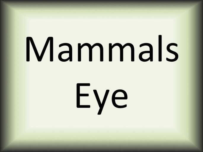 Mammals eye